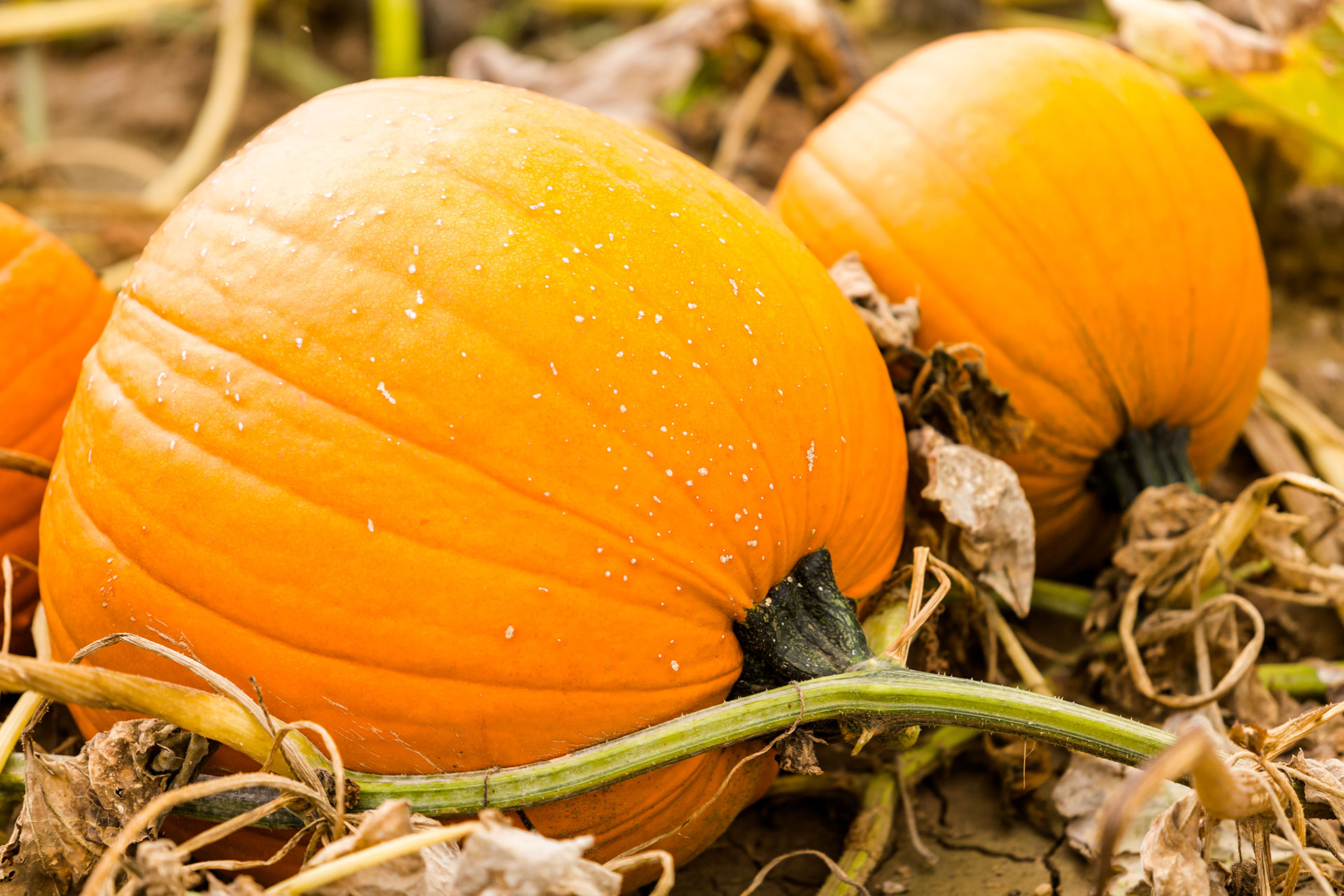 pick-your-own-pumpkins-01