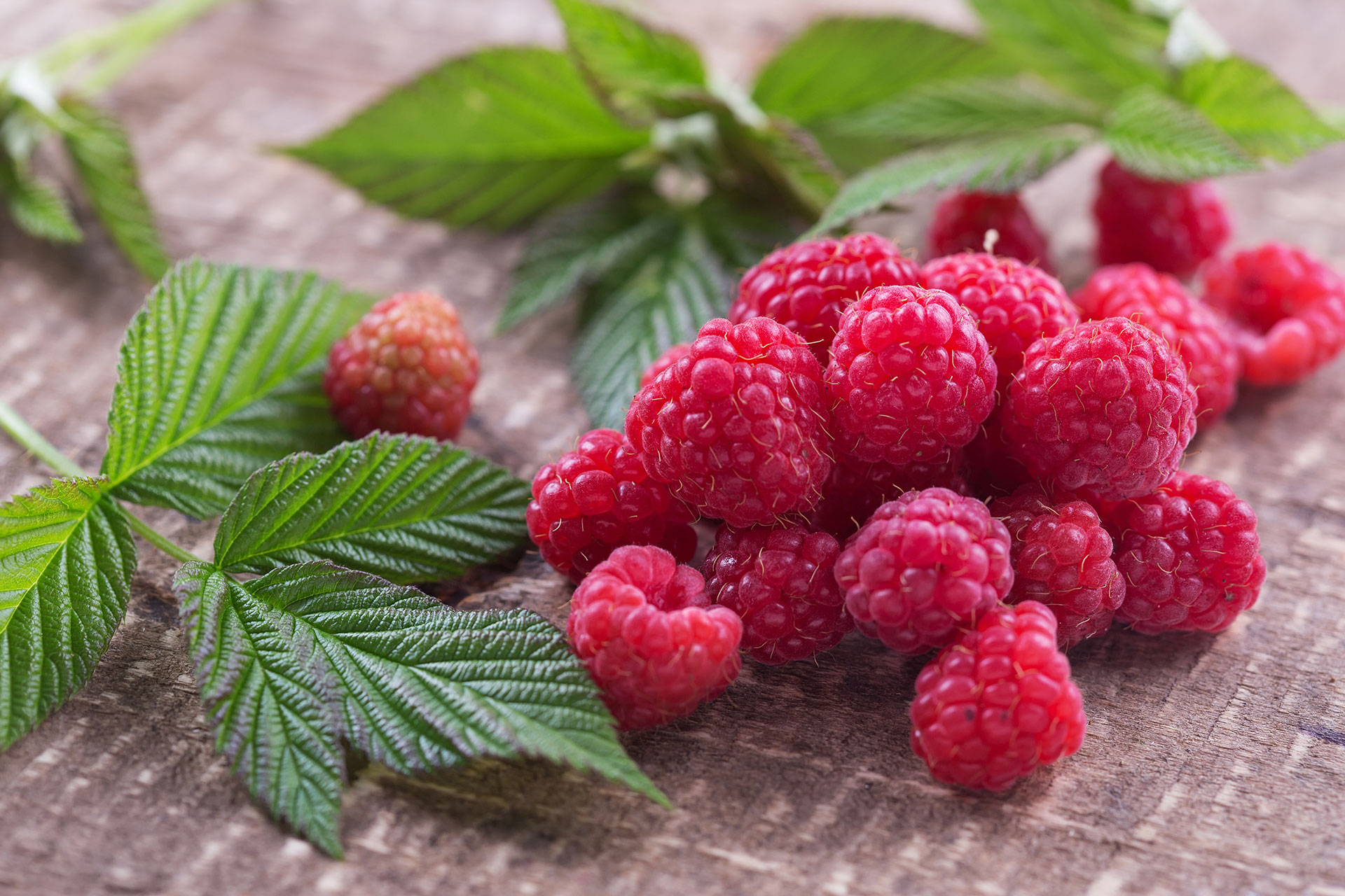 pick-your-own-raspberries-01