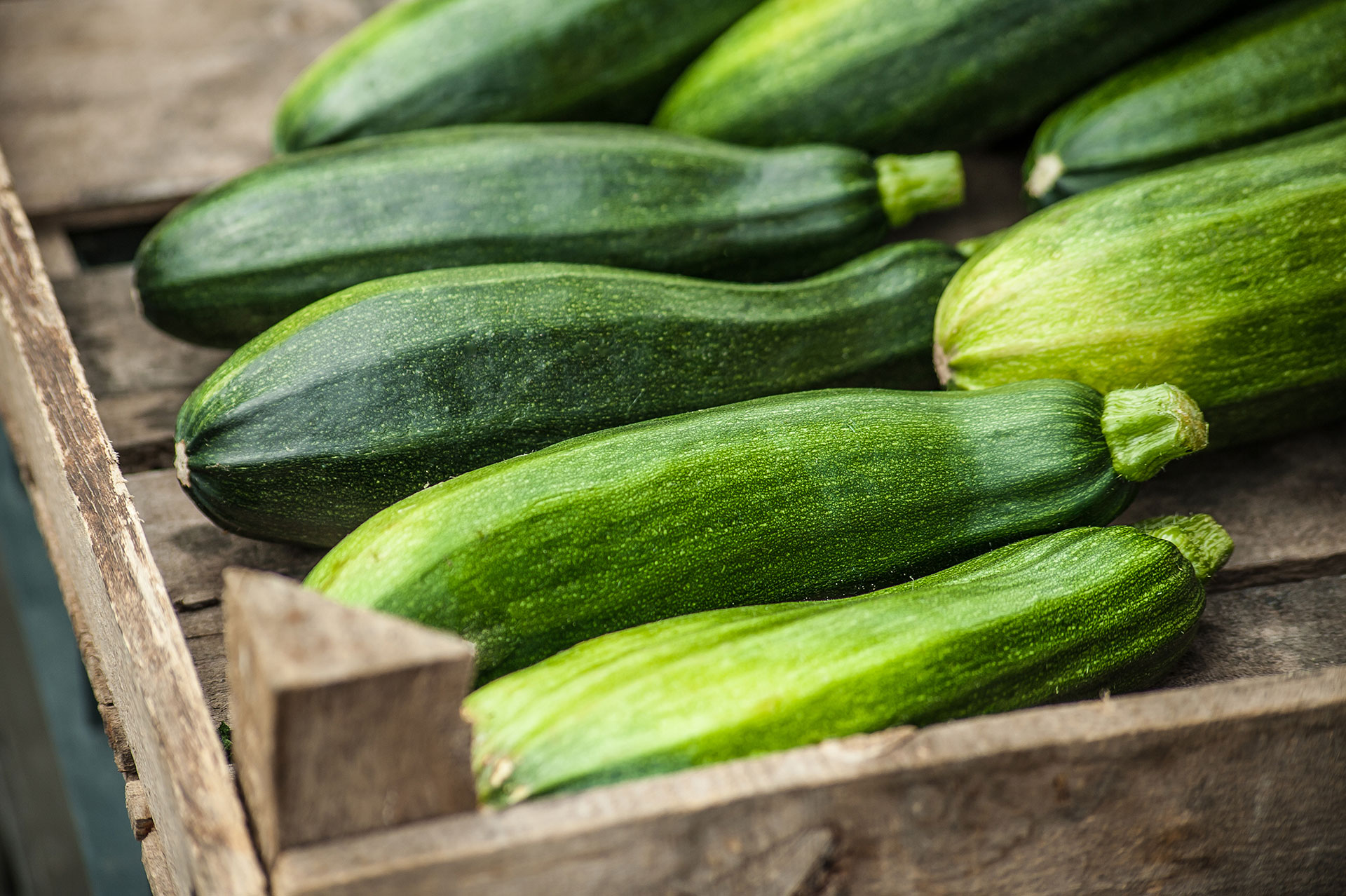 pick-your-own-zucchini-01