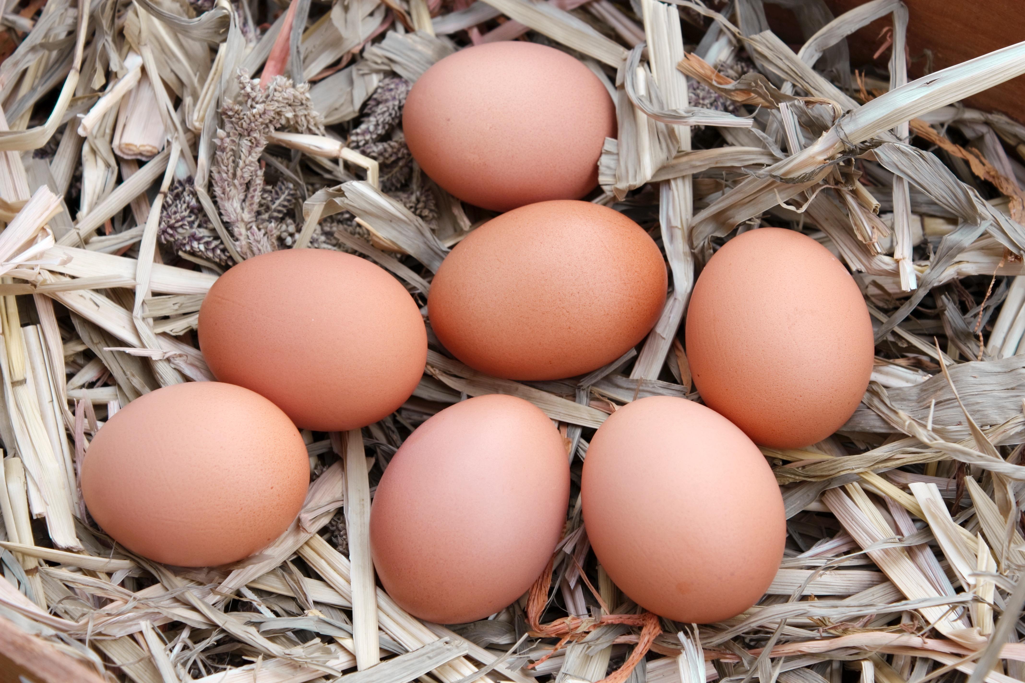 eggs-1149594